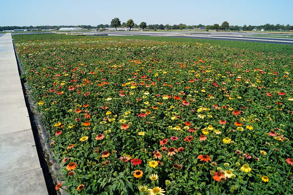 Freiflaeche mit Blumen